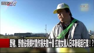 野豬、野鹿佔領鄉村農作損失數十億 扛槍女獵人日本新崛起行業!? 朱學恒 黃世聰 20161226-1 關鍵時刻