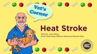 Heat Stroke | Vet's Corner with Dr. Jerry Klein