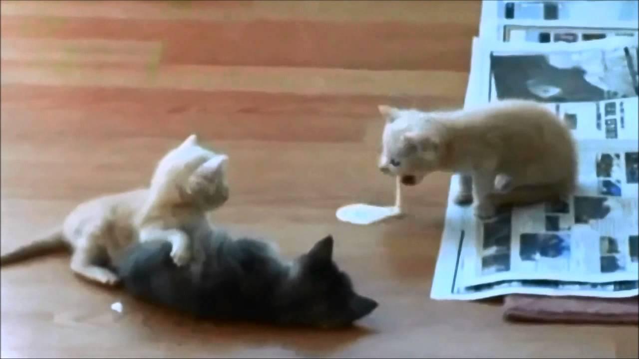 Гифка кот блюет