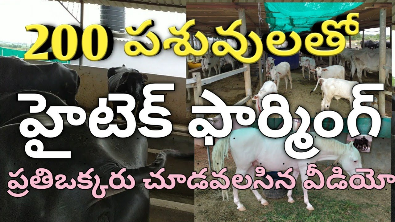 Dairy Farming In India  Dairy Farming In Andhra  Dairy -7595