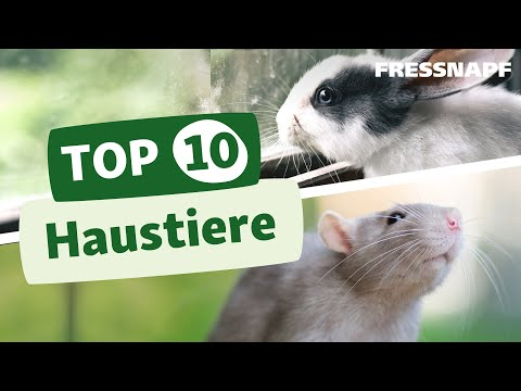 Top 10 Haustiere Youtube