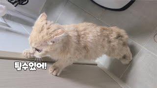 #shorts 목욕하다 탈출 시도 하는 아기 고양이 스…