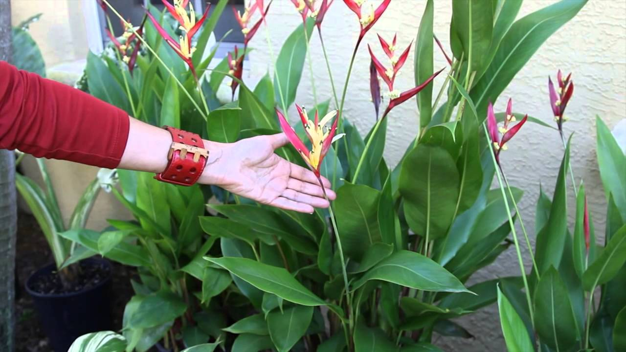 how to landscape a small front tropical garden landscaping floral decor youtube - Garden Design Tropical