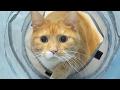 funny cat dash into tunnel / 【猫 おもしろ】猫がトンネルに楽しそうに飛び込む