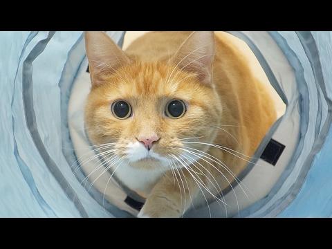 funny cat playing with tunnel / 【猫 おもしろ】猫がトンネルに楽しそうに飛び込む
