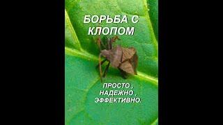 БОРЬБА С КЛОПОМ
