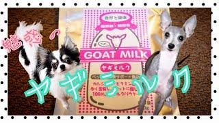 とっても大好きヤギミルク♪ カルシウムたっぷり!無添加、無着色の100%...
