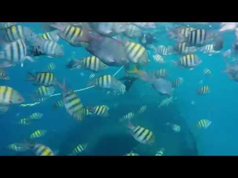 Snorkeling in Carlisle Bay Marine Park - Barbados [HD]