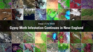 Gypsy Moth Infestation Continues in New England