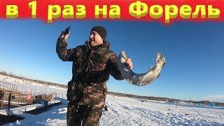 Ловля форели зимой на платнике рыбалка в первый раз