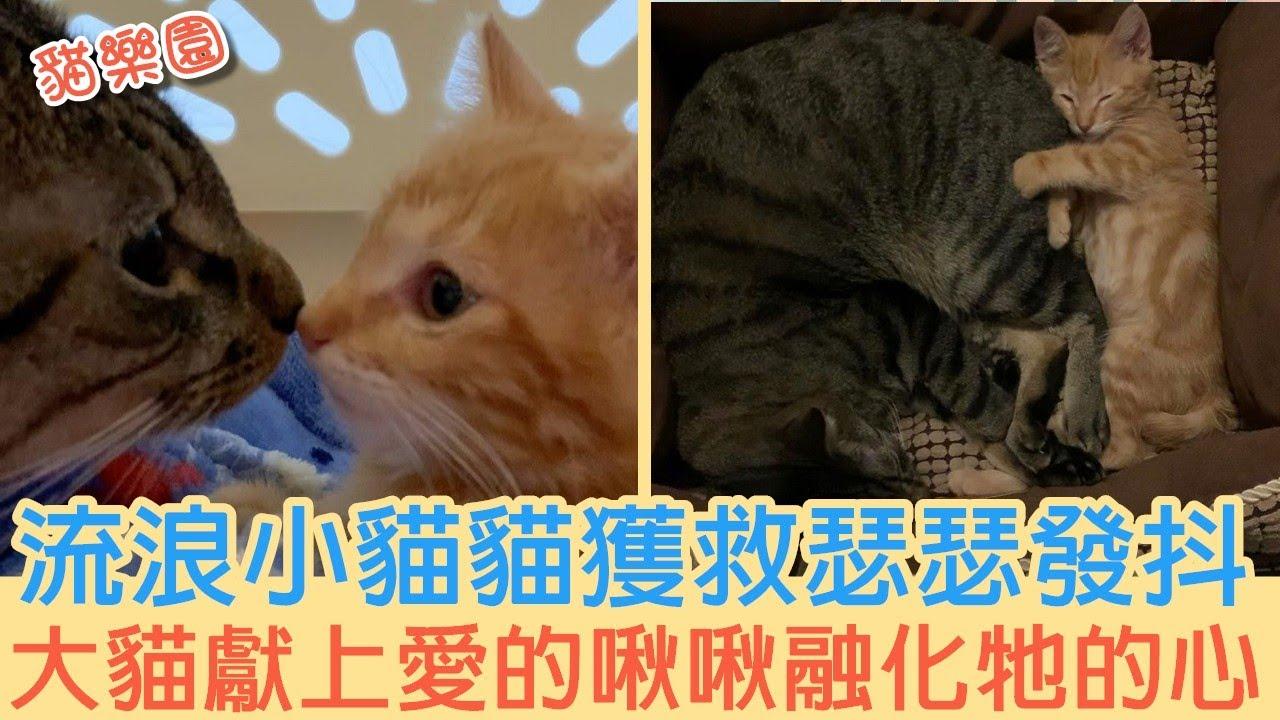 流浪小貓貓獲救瑟瑟發抖 大貓獻上愛的啾啾融化牠的心