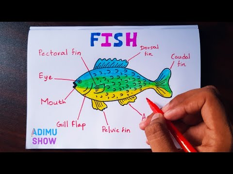 How  To Draw And Label A Fish | Step By Step Tutorial