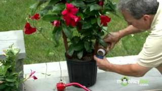 July Gardening Tips - Selecting Flowering Tropicals