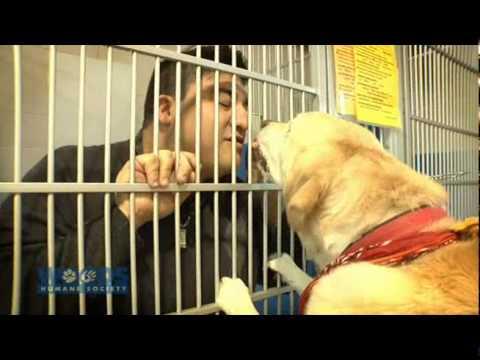 Dog & Cat Adoption Video-Woods Humane Society