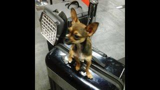 Как перевезти собаку за границу(, 2014-05-22T09:04:37.000Z)