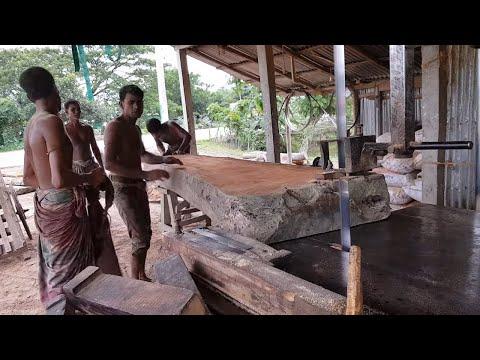 Kauri Black Tree Wood Board Cutting in Sawmill।Agathis Australis Board Cutting in Sawmill World