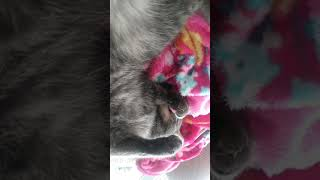 Junior my funny cat
