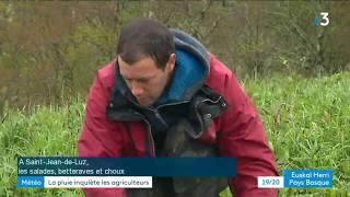Saint-Jean-de-Luz: les maraîchers souffrent de la pluie