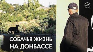 Собачья жизнь на Донбассе