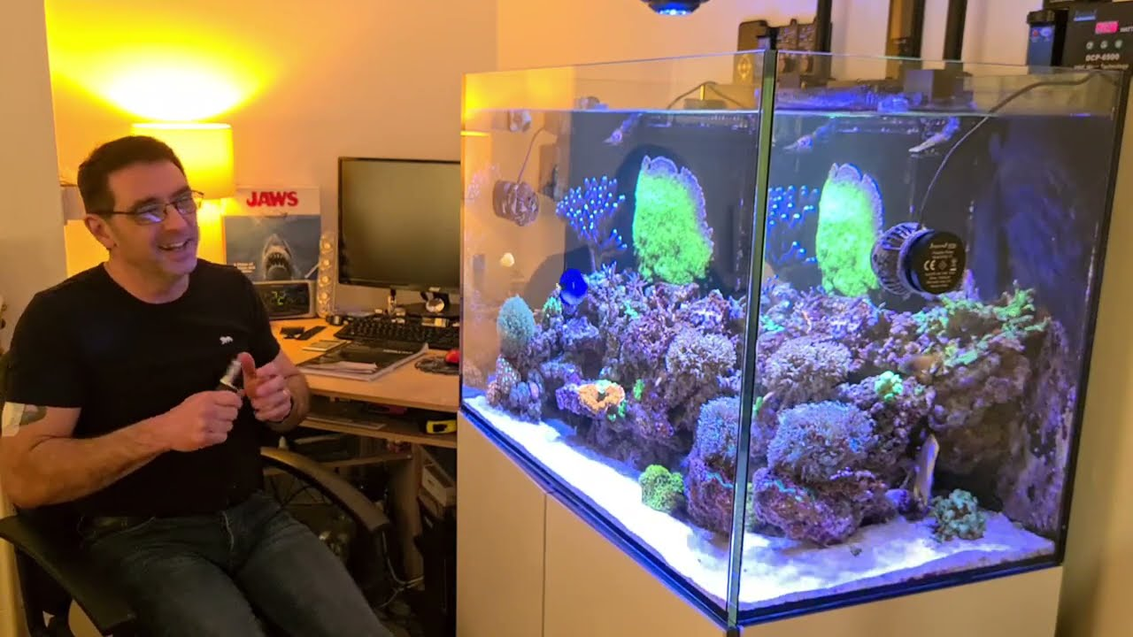 The BIG 1 YEAR UPDATE on the Reef Tank and New Tank Plans!!!