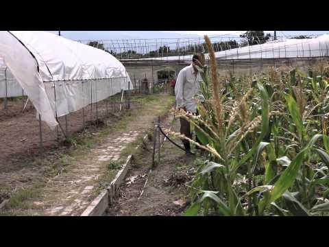 Organic farm, green your life