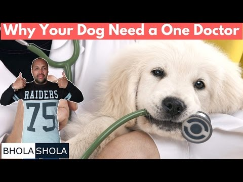 Pet Care - Why Your Dog Need a One Doctor - Bhola Shola