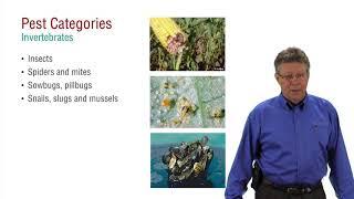 Pesticide Applicator Core Exam Prep Pest Categories