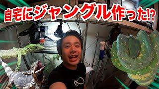 【DIY】自宅のジャングル部屋にいる爬虫類たちを見せるぜ!!