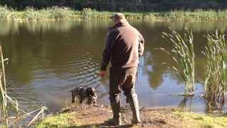 Hunting Dog - Water Training - Elke Von Den Donau Wirbeln In Solms - Azp Germany 2013