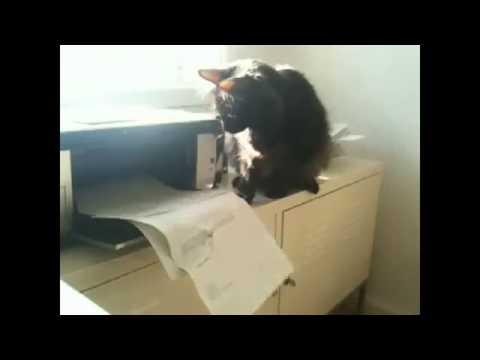 смешнык видео про кошек