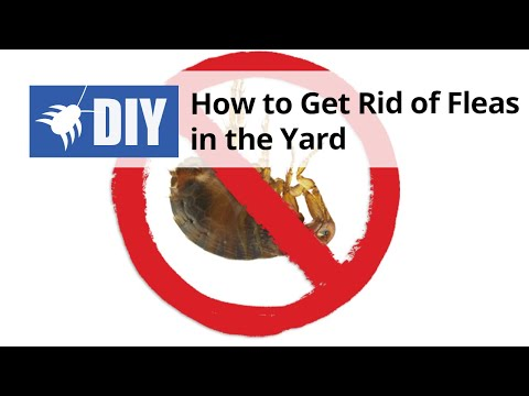 how to get rid of fleas in the yard youtube. Black Bedroom Furniture Sets. Home Design Ideas