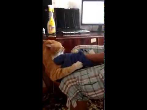 Cat attacks man and chases him down from YouTube · Duration:  1 minutes 32 seconds