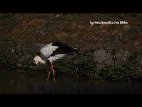 Hyogo Prefectural Homeland for the Oriental White Stork