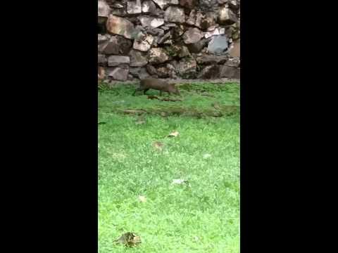 Panama Garden Wildlife
