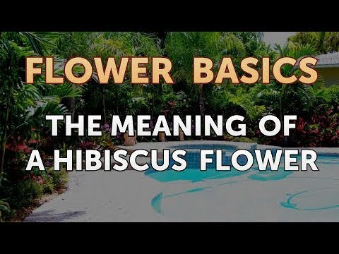 The Meaning Of A Hibiscus Flower Youtube