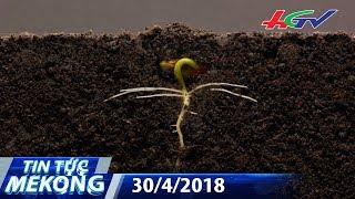 Thú vị quá trình phát triển của một hạt đậu | TIN TỨC MEKONG - 30/4/2018