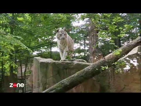 Zone Interdite Beauval Un Été Au Cœur Du Plus Grand Zoo De France