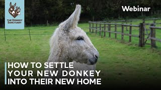 How to settle your new donkey into their new home | The Donkey Sanctuary Webinars