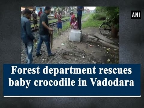 Forest Department Rescues Baby Crocodile In Vadodara - #Gujarat News