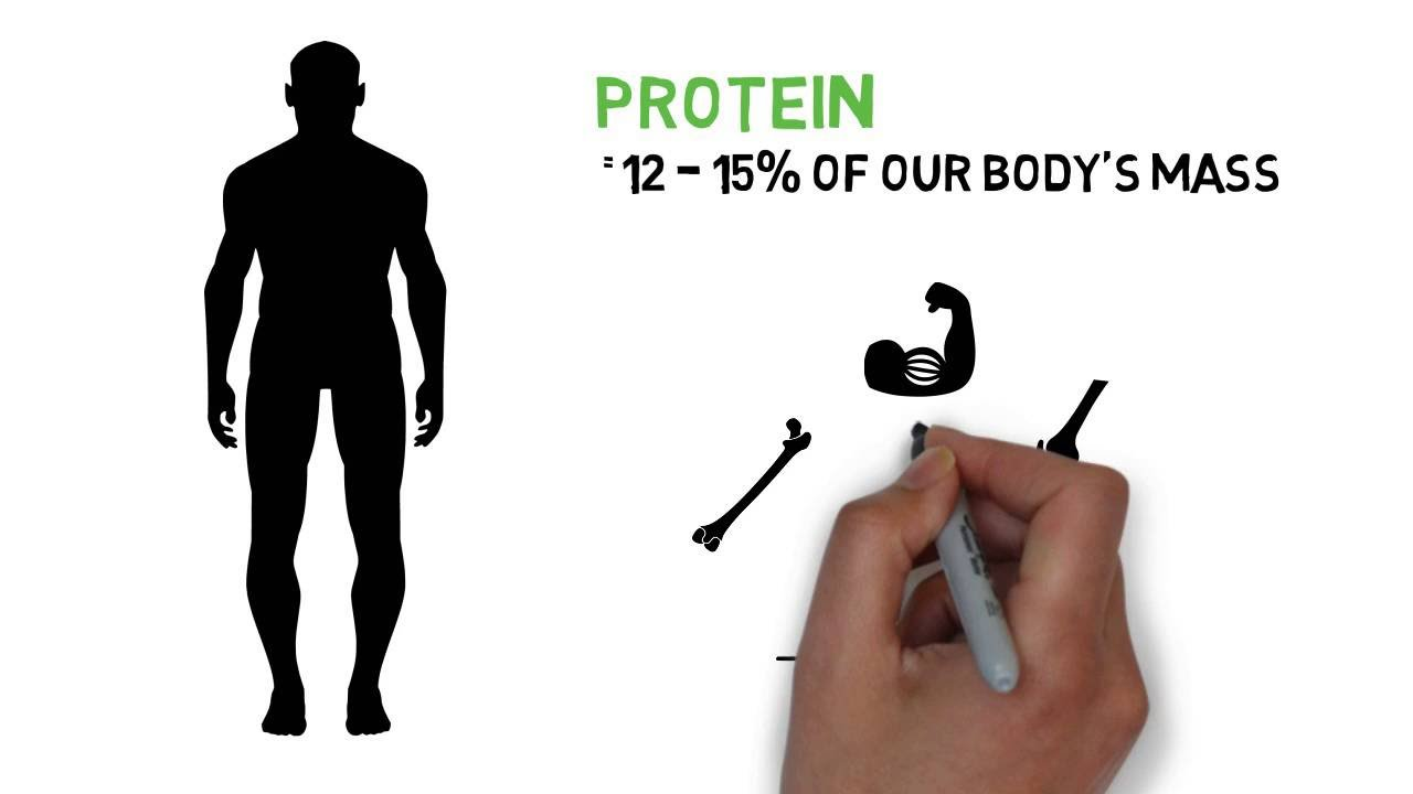 Why Is Protein Important For The Human Body Youtube