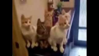 Смешные видео клипы с животными!