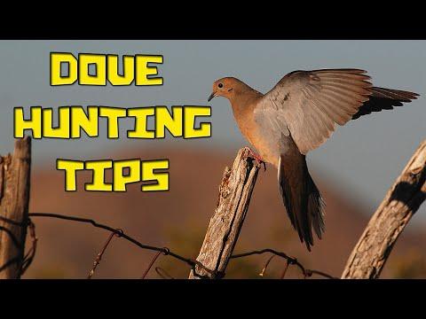 Dove Hunting Tips