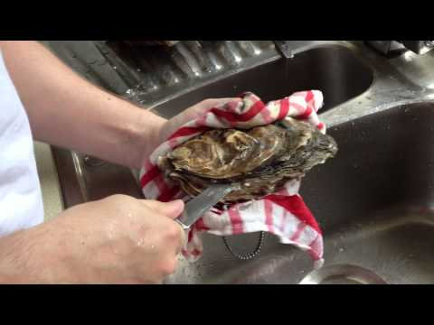 Simon Shows How to Shuck a Rock Oyster