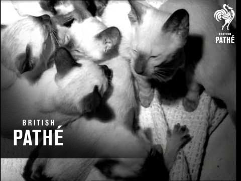 The Cat Show   (1967)