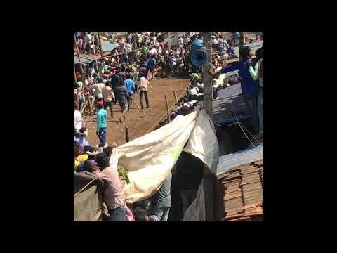 Hori habba bull race new 2019 21