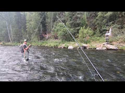Alaskan Local Tells All On The Russian River - Salmon Fishing And Game Wardens