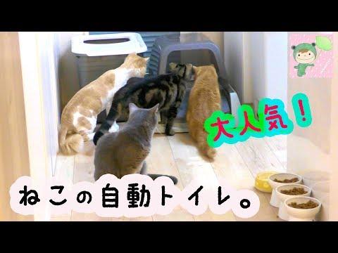 猫さんの自動トイレ がハイテクー!!!