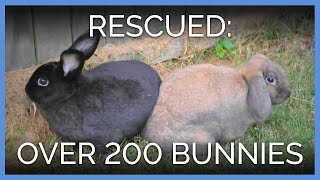 Peggy, Lucy, and 200 Other Bunnies Saved!