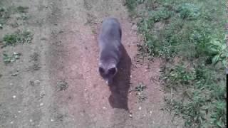 Кошка ходит за хозяйкой .