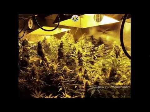 Heath Robinson Hydroponic Perpetual Cannabis Grow Youtube